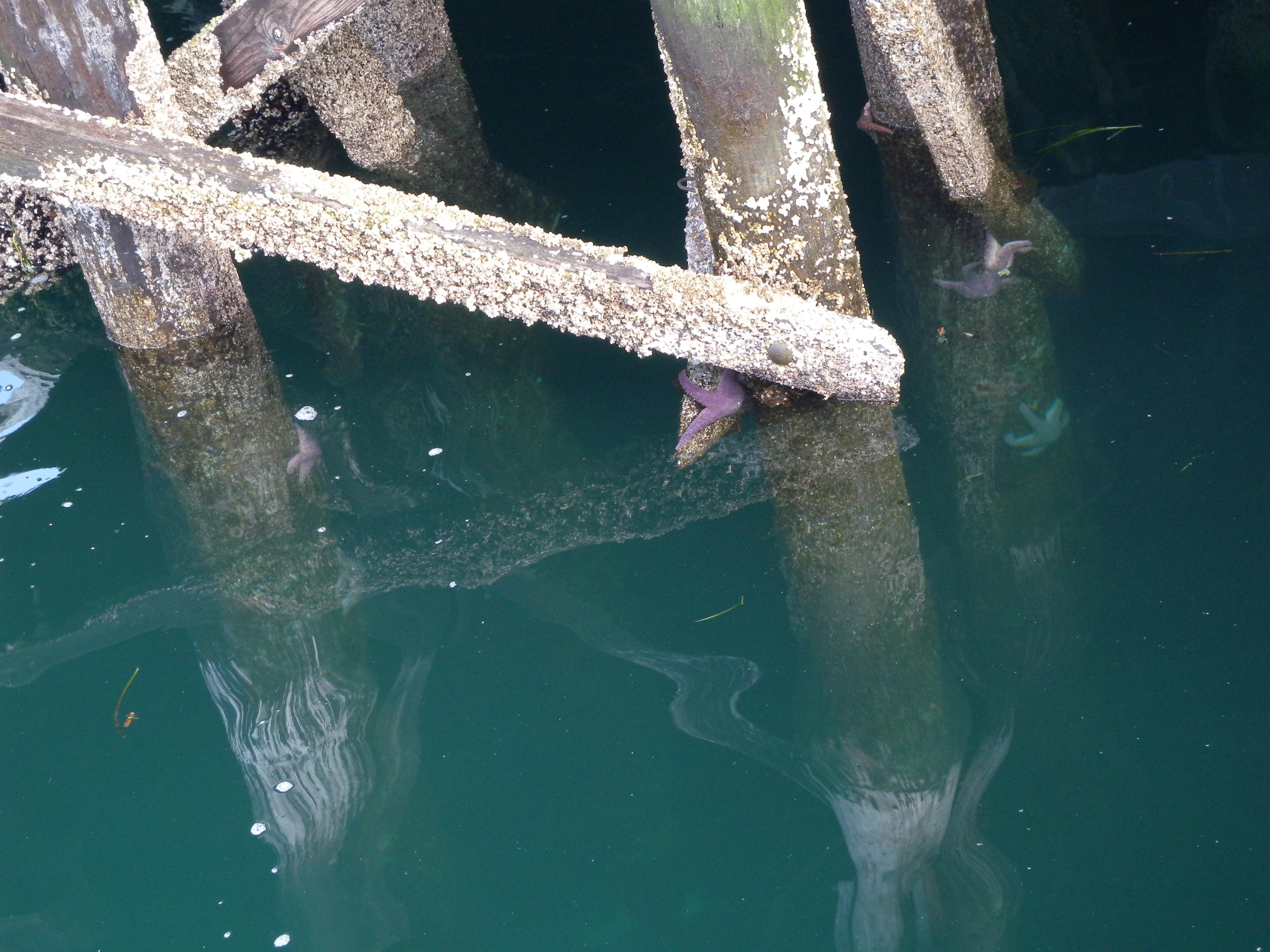 Starfish below