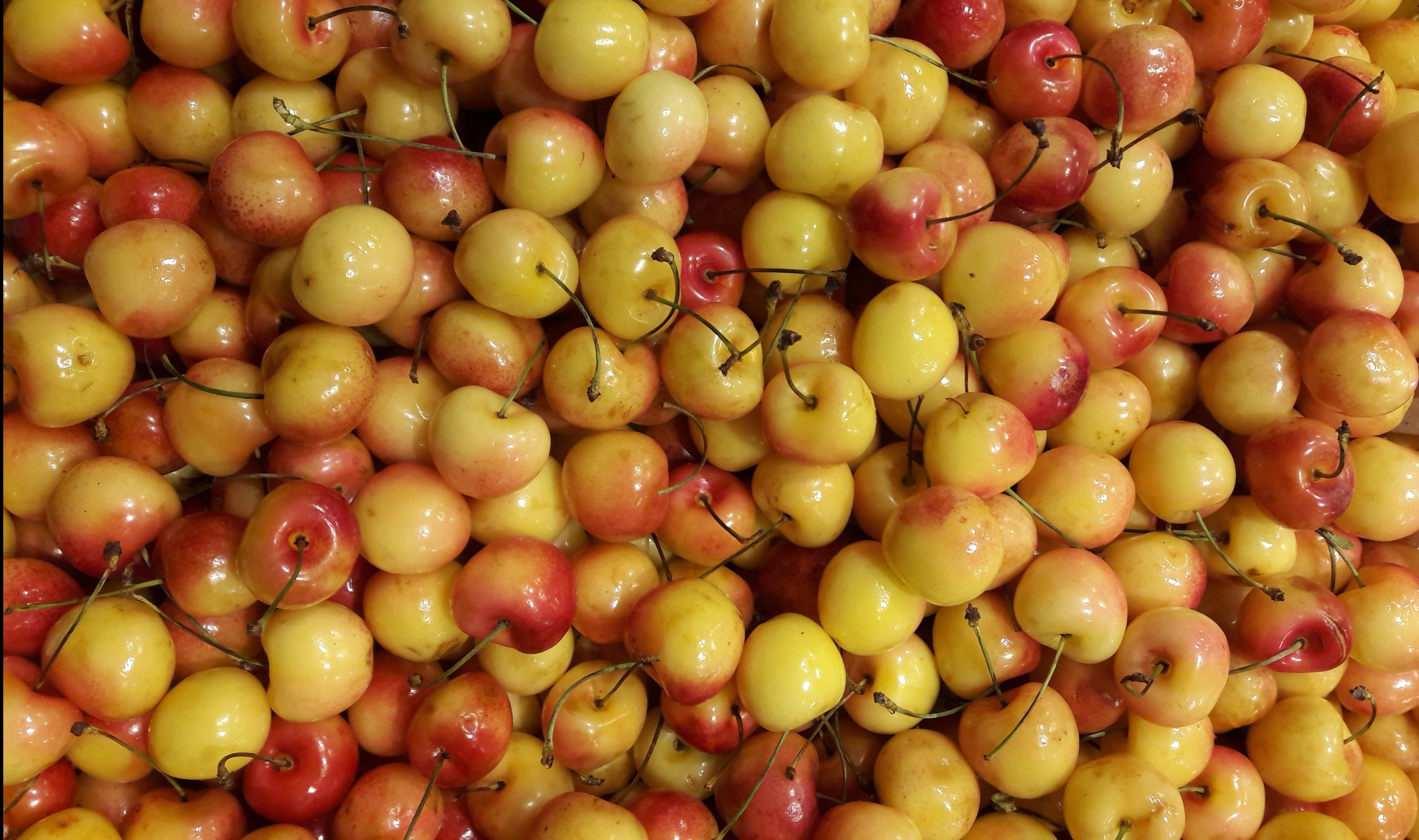 reiner-cherries-e1560315618369.jpg